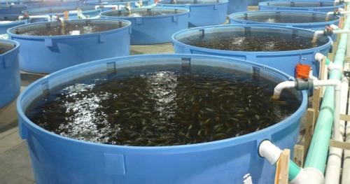fish_pond